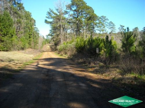 25.5 Ac, Young Pine Plantation Sui : Hornbeck : Sabine Parish : Louisiana
