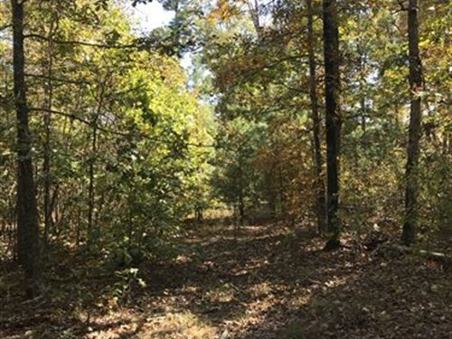 Ozark Hunting/Recreational Property : Leslie : Searcy County : Arkansas