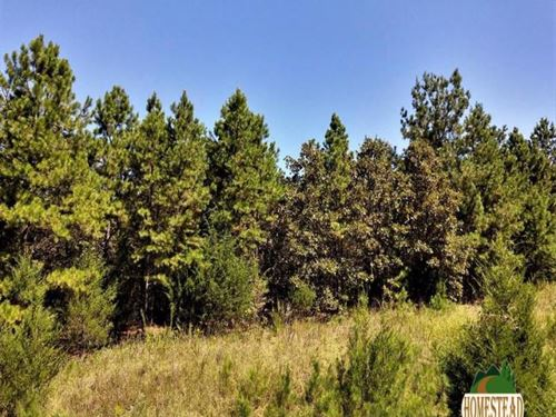 Heavily Wooded Parcel With Electric : Oxford : Izard County : Arkansas