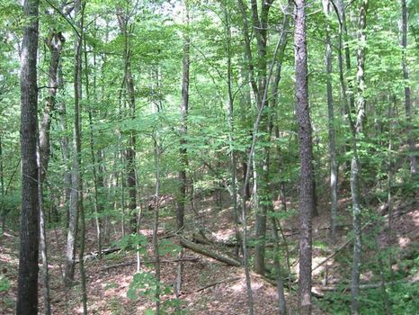 80 Acs for Hunting, Camping & ATVs : Gaylesville : Cherokee County : Alabama
