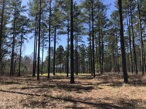 Great Hunting Tract In Hurtsboro : Hurtsboro : Russell County : Alabama