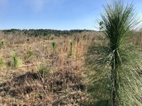 70+/- Acres Boggy Hollow Road : Opp : Covington County : Alabama