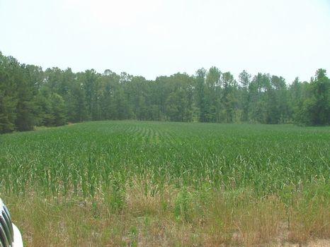 114 Prime Development/Hunting : Stevenson : Jackson County : Alabama