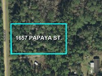 High & Dry Bunnell Buildable Lot : Bunnell : Flagler County : Florida