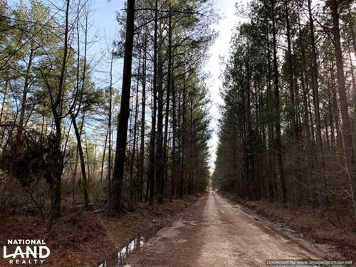 Timber Investment & Hunting Propert : Carthage : Leake County : Mississippi