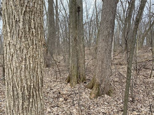 Beautiful Mature Wooded Homesite : Oregon : Dane County : Wisconsin