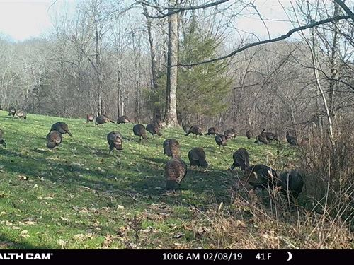 29.28 Wildlife Rich Acres One Hour : Cornersville : Marshall County : Tennessee