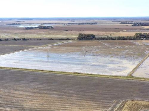 681 Row Crop Acres, 75 Precis : Waldenburg : Poinsett County : Arkansas