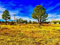 Lot w Utilities by National Forest : Heber-Overgaard : Navajo County : Arizona