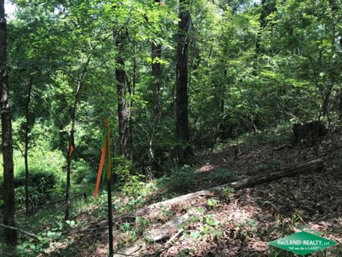 19.9 Ac, Mixed Hardwood & Pine : Enterprise : Catahoula Parish : Louisiana