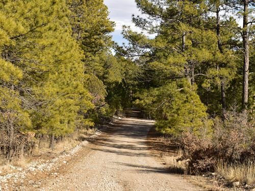 Relax Be At One With Nature $69/Mo : Timberon : Otero County : New Mexico