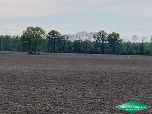 40 Ac, Irrigated Farm Land : Crowville : Madison Parish : Louisiana
