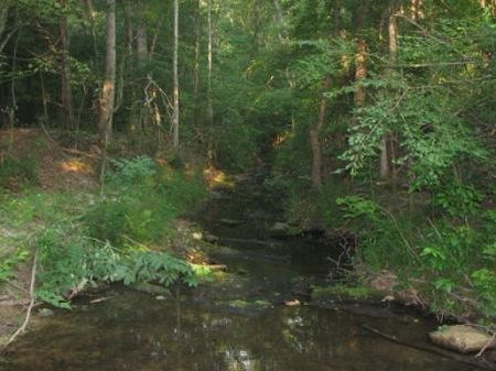 29+/- Acres Near I-77 Exit 73 : Edgemoor : Chester County : South Carolina