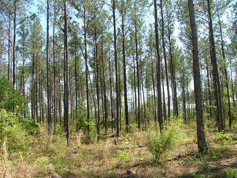 218 Acres - Motivated Seller : Lyons : Toombs County : Georgia