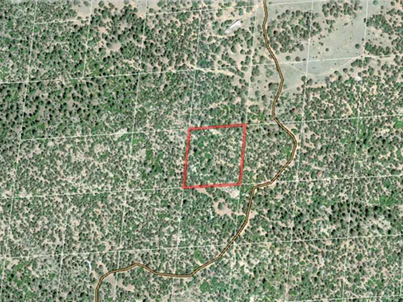 Cotopaxi Land for Sale with Trees : Cotopaxi : Fremont County : Colorado