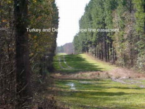 95 Acres For Sale : Soperton : Treutlen County : Georgia
