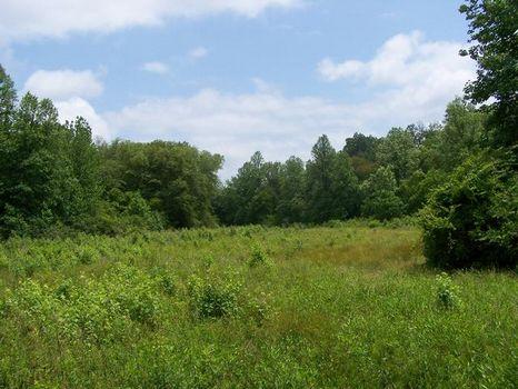 240+/- Acres Hunting Land on Creek : Ashland : Clay County : Alabama