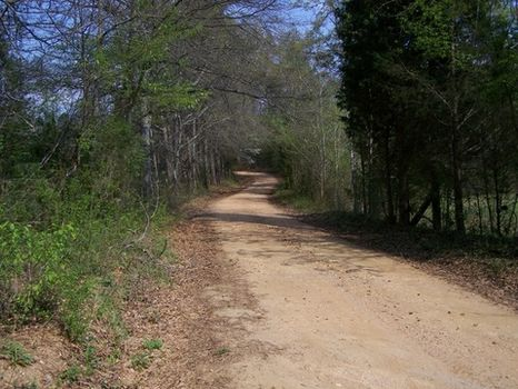 30.44+/- Acres Pasture/timberland : Millerville : Clay County : Alabama