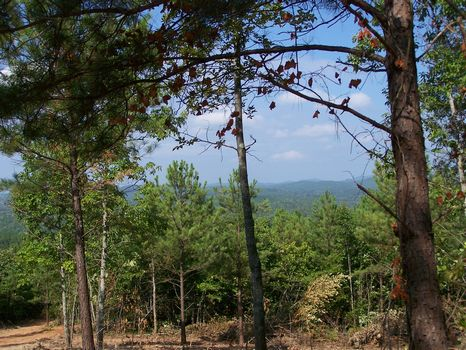 117+/- Acres Hunting/Timberland : Millerville : Clay County : Alabama