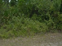 Perfect Home Site Property : Port Charlotte : Charlotte County : Florida