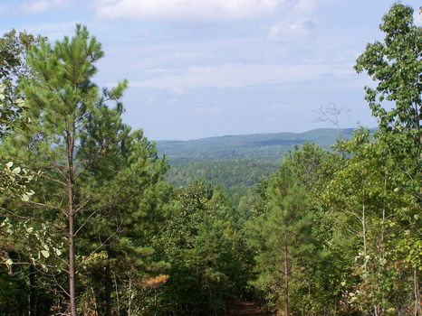 147+/- Acres Timber/Pastureland : Millerville : Clay County : Alabama