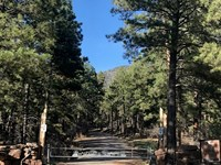 Northern NM Alpine Hunting Ranch : Chama : Rio Arriba County : New Mexico
