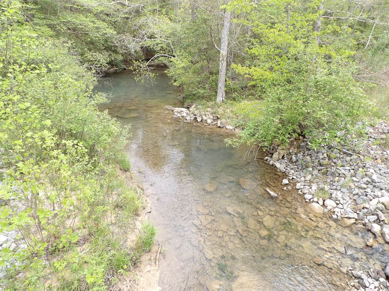 Beautiful Area, Creek, Hardwoods : Dunlap : Sequatchie County : Tennessee
