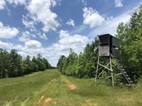 Diverse Hunting Investment Tract : Talbotton : Talbot County : Georgia