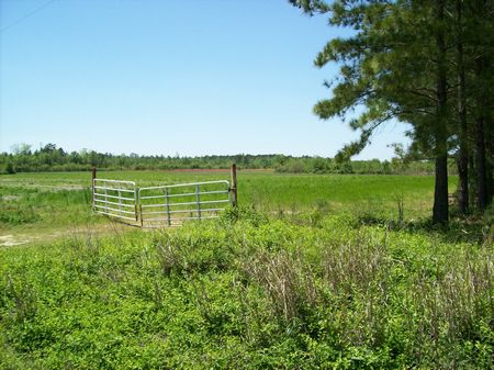 Estate Homesite Potential Horsefarm : Tarheel : Bladen County : North Carolina