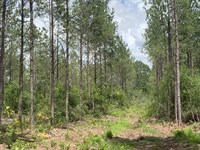 Recreational Tract in Ware County : Waycross : Ware County : Georgia