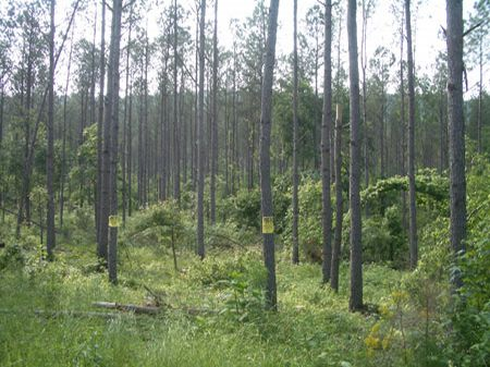 885 Acres On Back Valley Ridge : Lyerly : Chattooga County : Georgia