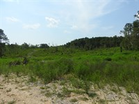 130 Acres With Gentle Topo R80028 : Lafayette : Walker County : Georgia
