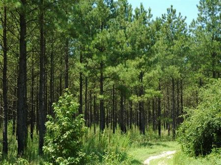 Timber & Land Investment : Rennert : Robeson County : North Carolina
