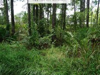 .25 Acres Only $1Dn, $199/Mo : Sebring : Highlands County : Florida