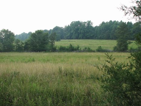 97+/- Ac Openland, House & Pond : Chester : Chester County : South Carolina