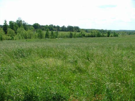 20+/- Ac Farm/Develop Opportunity : Sylvania : Jackson County : Alabama