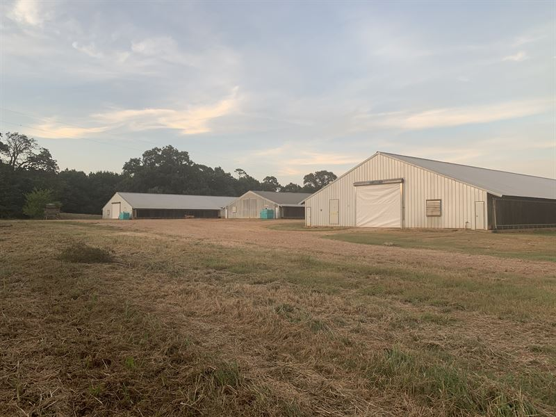 Successful Poultry Farm : Nacogdoches : Nacogdoches County : Texas