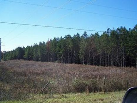 10 Acre Home Site : Ellaville : Schley County : Georgia