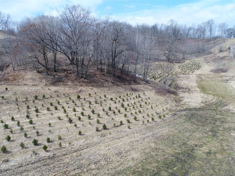 40 Acres Trempealeau County, WI : Independence : Trempealeau County : Wisconsin