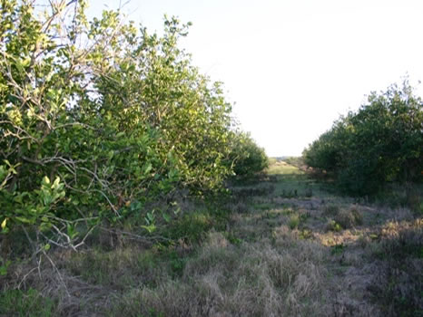 23.58 Acres : Fellsmere : Indian River County : Florida