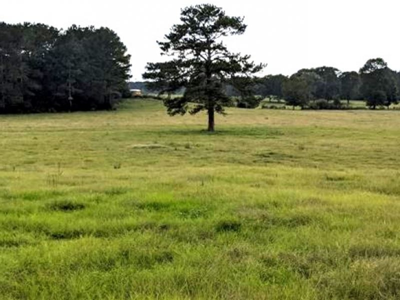 22 Acres In Pike County In McComb : McComb : Pike County : Mississippi