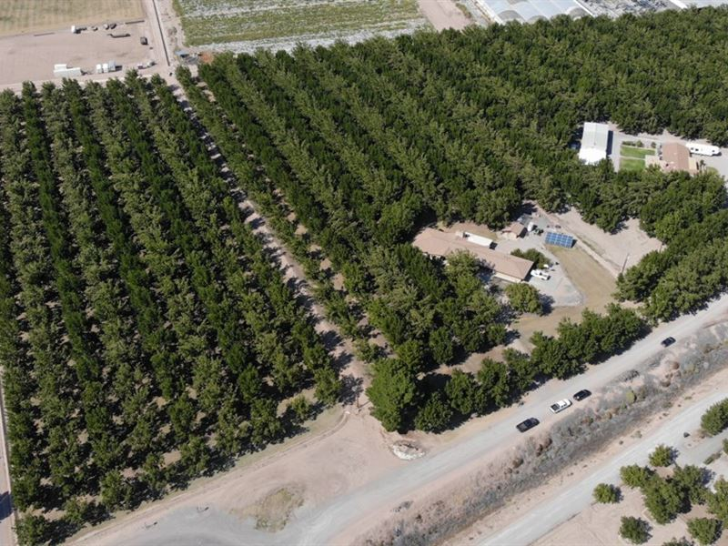 Southern New Mexico Pecan Farm : Las Cruces : Dona Ana County : New Mexico