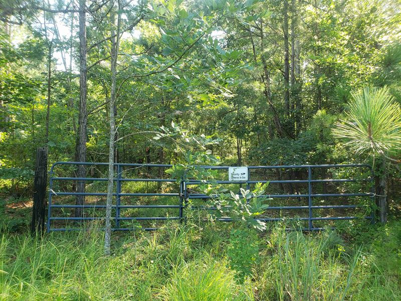 Densely Wooded Mini Farm : Letohatchee : Lowndes County : Alabama
