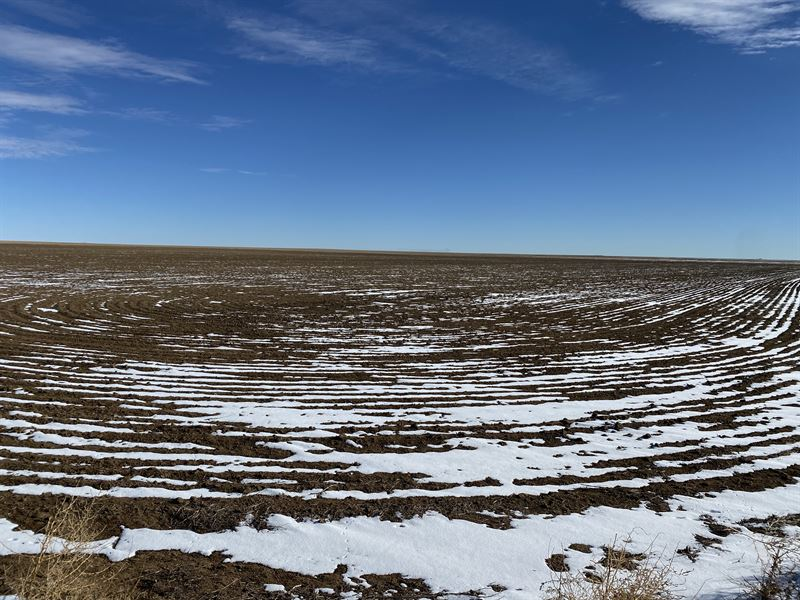 Productive Dryland Farm : Limon : Lincoln County : Colorado