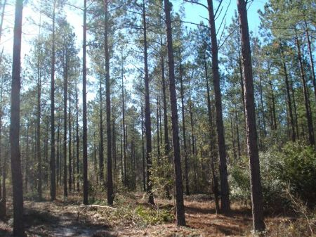Mill Creek Tract 249 +/- Acres : Bellevue : Burke County : Georgia