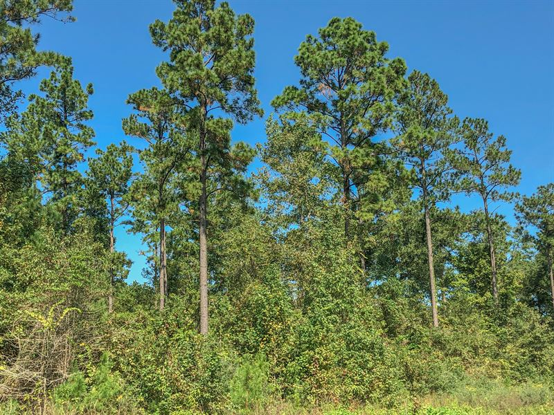 22 Ac Wilderness Estates Tr 4-3 : Point Blank : San Jacinto County : Texas