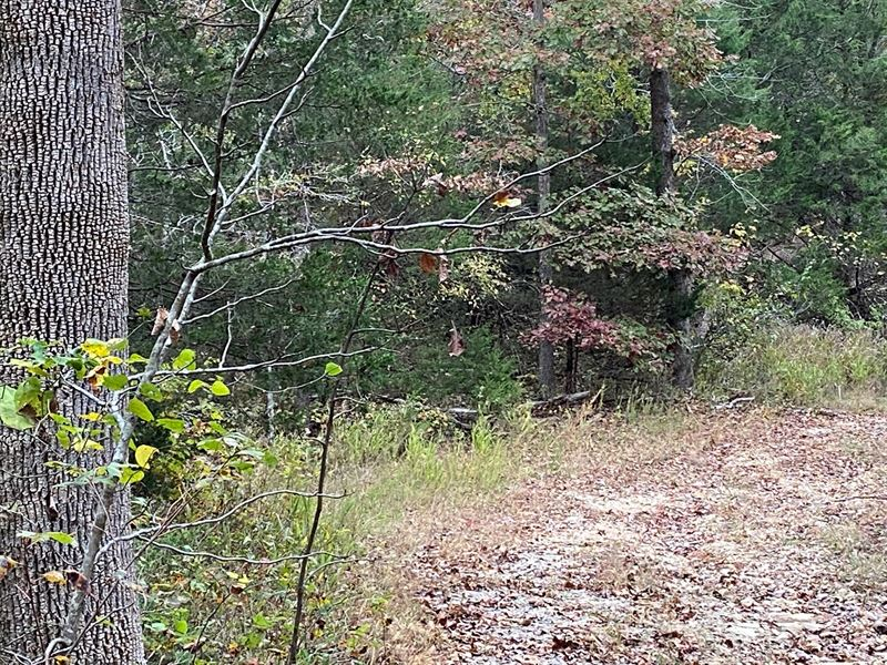 AR Recreational Property Deer : Ravenden Springs : Randolph County : Arkansas