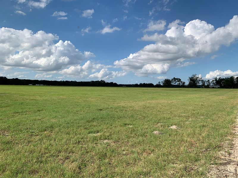 40 Acres Cleared Pasture Cows : O'brien : Suwannee County : Florida