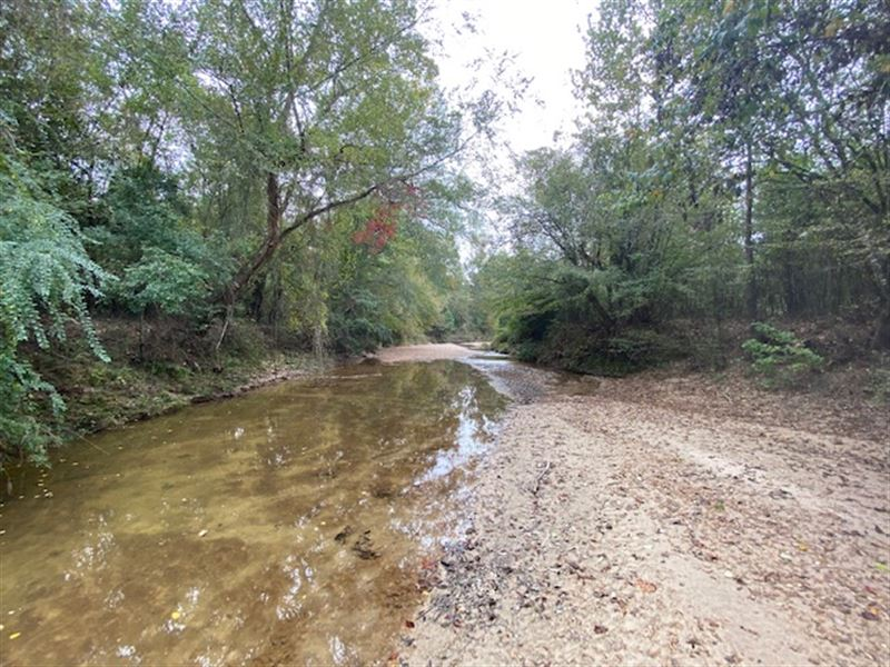 69 Acres Of Prime Hunting Land : Woodville : Wilkinson County : Mississippi