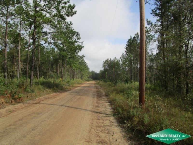 39.7 Ac, Timberland For Home Site : Burkeville : Newton County : Texas